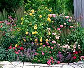 Pink 'Lisa', 'Charming', 'Bad Birnbach', 'Bonica' (Rose)