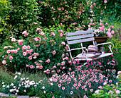 Rose 'Bonica', Dianthus x allwoodii 'Alice'
