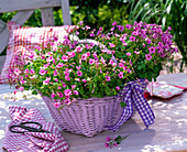 Oxalis 'Pink Pillow' (clover) in pink basket with handle