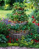 Barrel tower planted with strawberries