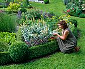Herbs in bush surround