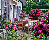 Shaded terrace with Hydrangea, Plectranthus