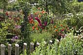 Cottage garden with Zinnia, Dahlia, Gladiolus