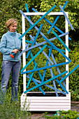Plant Bell vine in box with funny trellis