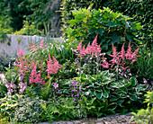 Shadow flowerbed, Astilbe, Hosta 'Francee', 'Patriot'