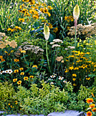 Yellow-white bed with perennials and summer flowers