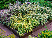 Herb bed with clinker border