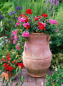 Pelargonium peltatum 'Amethyst', zonal Pac Little Lady 'Scarlet'