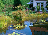Swamp plants for water purification