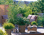 Asian terrace with bamboo
