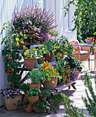 Vegetables and herbs on wooden plant stairs