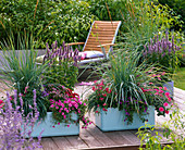 Large planters with Leymus arenarius (beach grass), Agastache