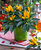 Capsicum annuum 'Chilie Joe' (ornamental paprika)