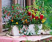 Capsicum frutescens (chili), Capsicum annuum (ornamental paprika)