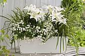 Lilium 'Reinesse' (Lilien), Diascia Breezee 'Snow' (Elfenspiegel)