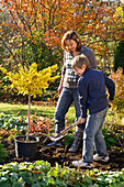 Mother and son planting Ginkgo biloba (Ginkgo tree)