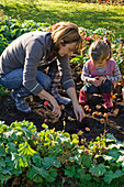 Mother and daughter planting tulipa (tulip)