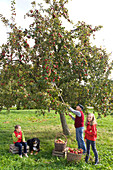 Family with dog picking apples on orchard