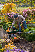 Grandfather harvesting vegetables in the farm garden