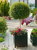 Ligustrum (Privet) Stems in Classic Garden Element