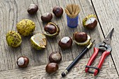 Make chestnut animals