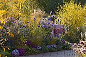 Autumn flowerbed with aster, Miscanthus, Spartina