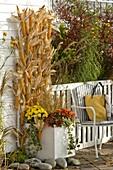 Zea (corncob) hung on trellis from planter
