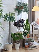Succulent corner in the living room