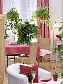 Hanging basket in the room as a room divider between living and dining room