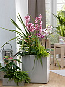 Cymbidium (Kahnorchis), Phalaenopsis (Malay flower), Anthurium