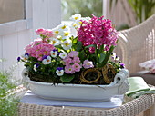 Ceramic white Jardiniere planted with Hyacinthus 'Pink Pearl'