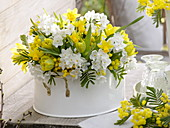 White metal bowl with Narcissus 'Inbal' syn. 'Paperwhite' 'Tete a Tete'