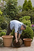 Man replant big potted plants