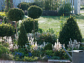 Green and white bed with Buxus (box)