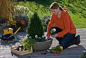 Put spring onions under autumn planting