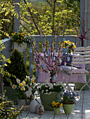 Easter balcony with Prunus triloba decorated with Easter eggs