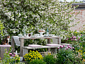 Seating in flowerbed in front of Malus 'Evereste' (ornamental apple)