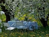 Seating group under Prunus cerasus in blooming meadow