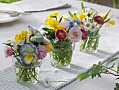 Small bouquets of viola 'Etain', Viola cornuta