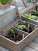 Vegetable seedlings in miniature greenhouses on the terrace