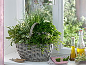 Herb basket by the window