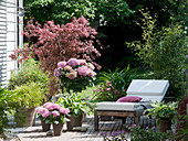 Wooden terrace with Acer palmatum 'Atropurpureum'