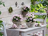Tischdeko mit Marienglockenblumen