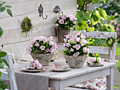 Table decoration with ladybug flowers