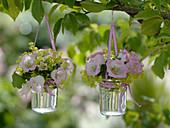 Campanula medium Poem 'Rose' (Marble bellflower), Alchemilla