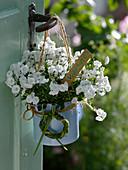 Stuffed bellflower in enameled milk pot as a welcome