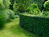 Round hedge from Carpinus betulus (hornbeam)