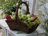Apples 'Weisser Klarapfel' syn. 'Kornapfel' 'Jakobiapfel' freshly harvested