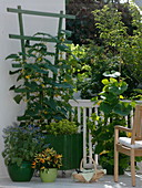 Cucumber in green bucket on the balcony