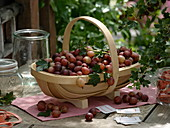 Wooden basket with freshly harvested gooseberry variety 'Rote Eva'